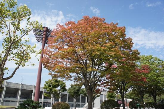 開成山公園内の一部の樹木が紅葉