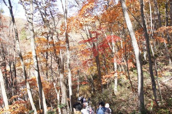 裏磐梯レークラインの見どころの一つ中津川渓谷へ向かう