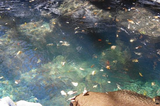中津川渓谷の清流の水は透きとおっています。