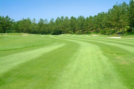 夏ゴルフコース