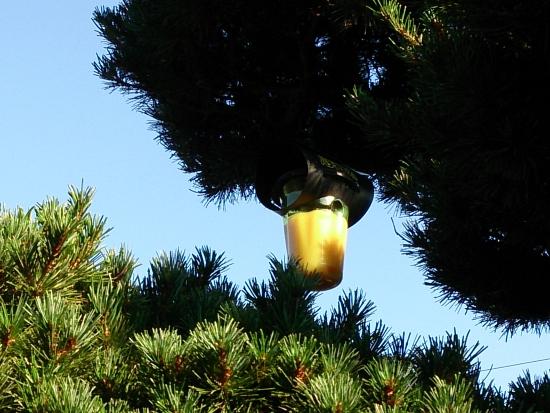 『ハチ激取れ』を庭木につるす