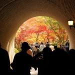 新潟弥彦村もみじ谷ルートでの紅葉の楽しみ方を紹介します