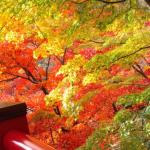 「紅葉狩りで宿泊予約ができるサイトを紹介します」というサイトを作ってみました