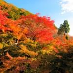 みんな京都の紅葉を見に行きたがるわけ